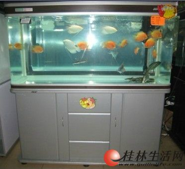 新买一个月的一米佳宝上滤鱼缸出售