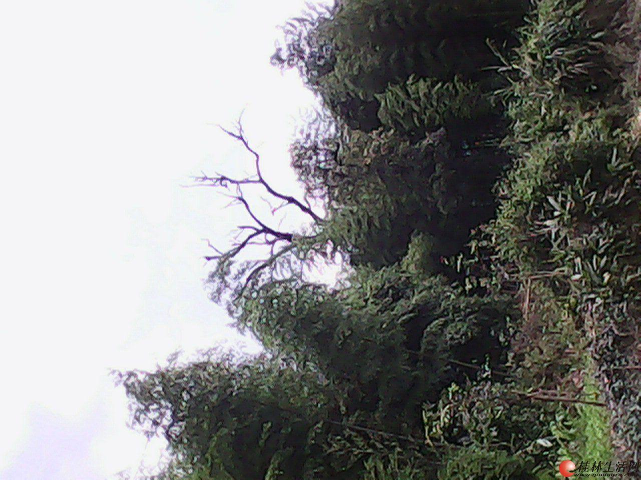各种大树和树根找买主