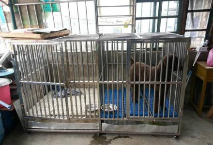 出售闲置的大型不锈钢狗笼