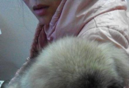 熊版高加索犬.母的。骨架超大。60天左右。