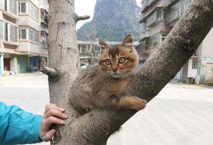 猫咪,三个月,妹妹,大眼睛,头圆,人见人爱!