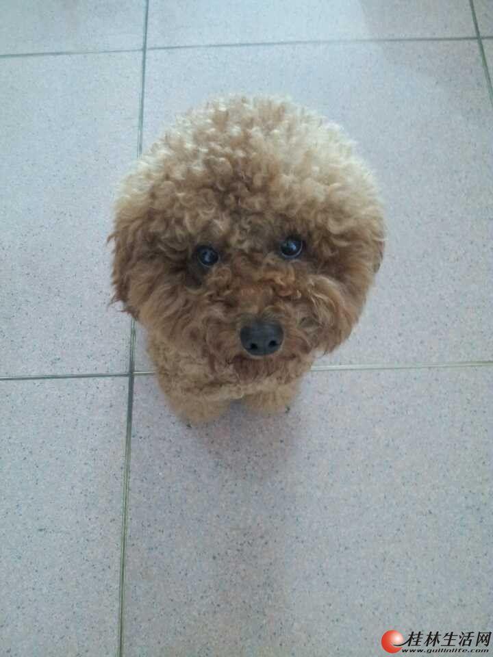 狗狗丢失了,重金求好心人帮忙提供线索找回来。