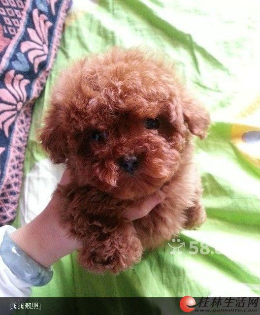圆圆的苹果脸明亮的眼睛可爱的小鼻子红色玩具泰迪熊