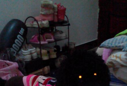 黑色纯种健康贵宾犬1岁半出售