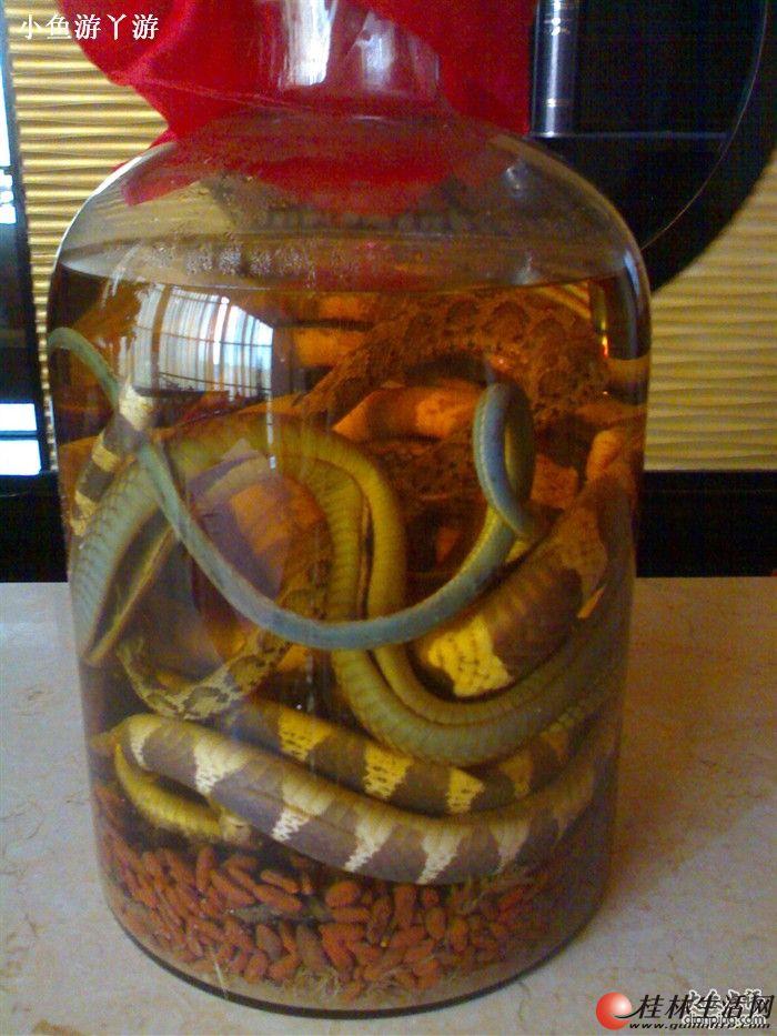 5斤乌梢蛇