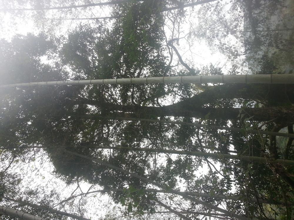 香楠木树出售保送到位手续合法