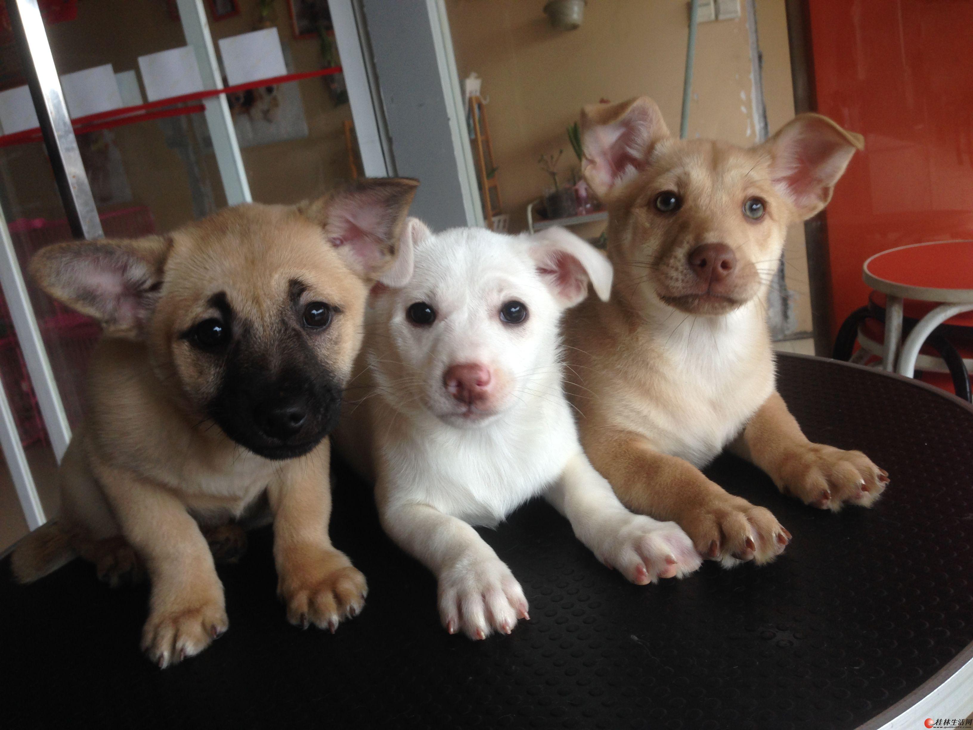 帮朋友免费结缘3只可爱的串串狗