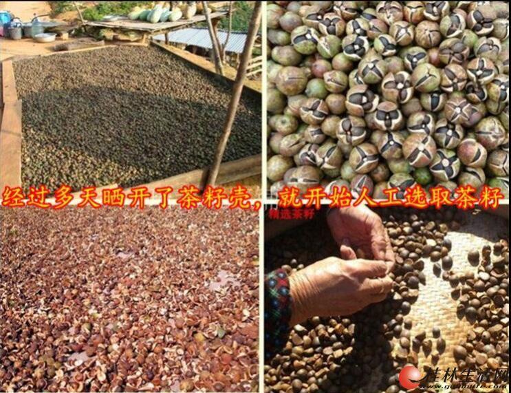 桂林手工制作花生油茶籽油出售纯正无添加花生油吃的放心