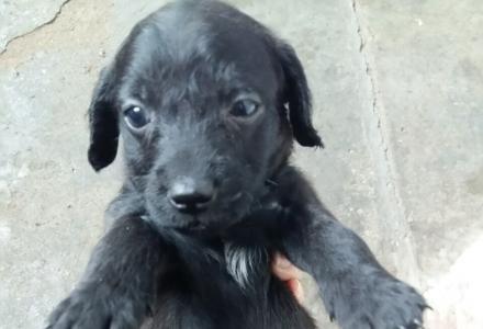 家养可爱小狗狗便宜出售
