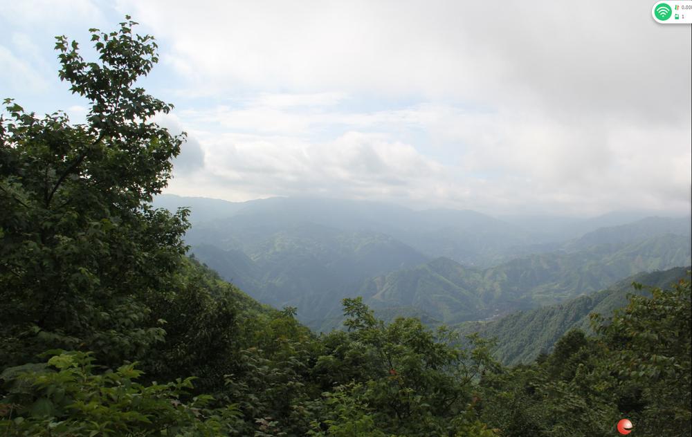 本公司求租桂林及周边市、县原始森林、野生杂木林用于林下药材种植。