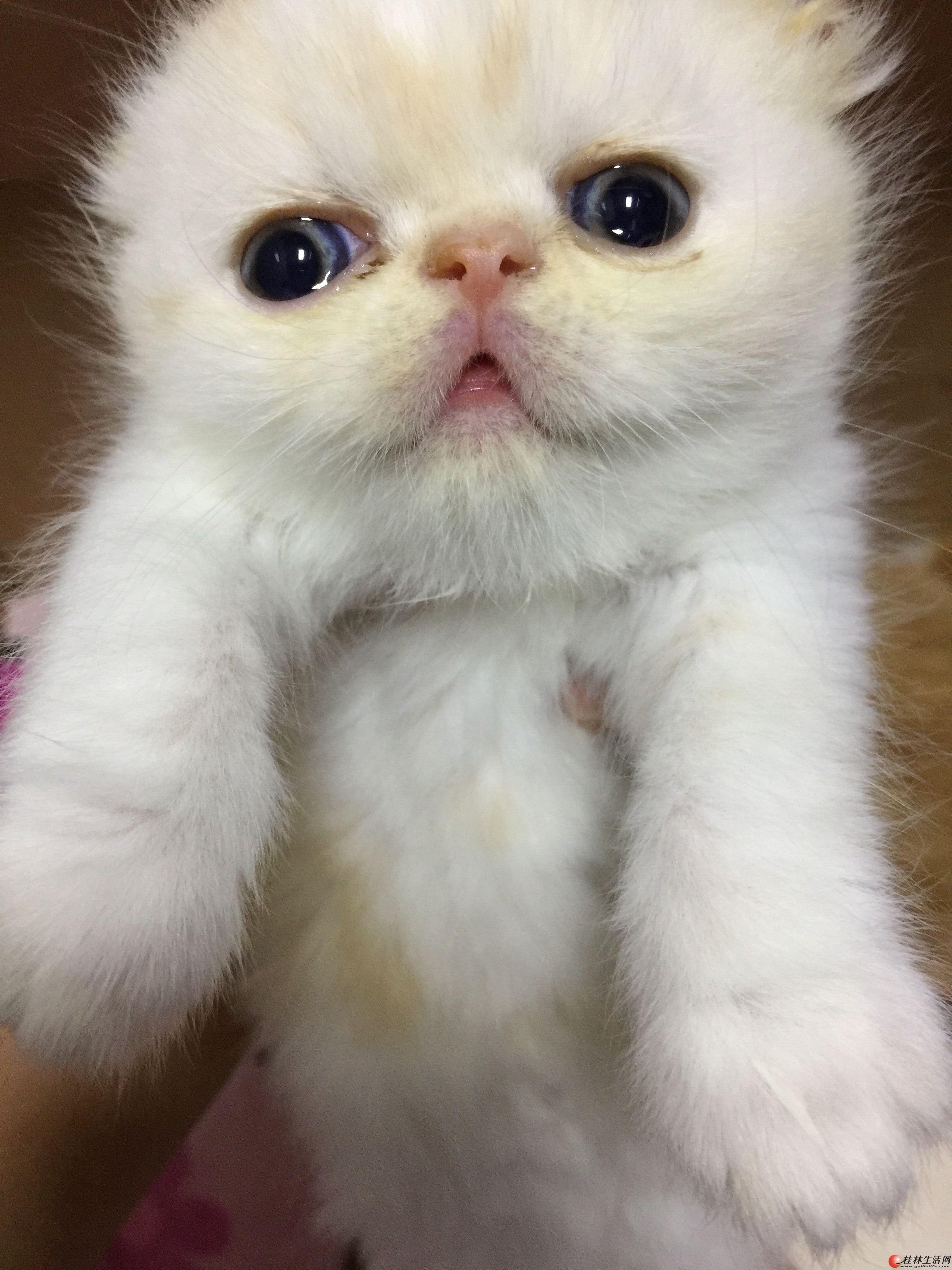 加菲猫宝宝mm找家长
