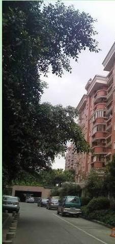 出售,七星花园紫竹苑,3房2厅2卫,150平米,2楼,75万,中装修