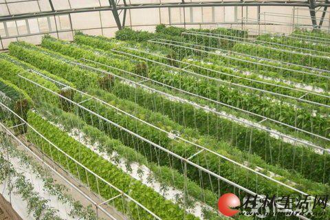 加盟益康园芽苗菜种植技术加盟 0元加盟年入百万