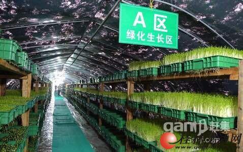 有机豆芽为绿色蔬菜树帜,小本创业加盟首选
