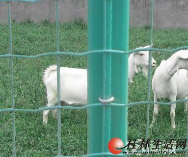 山林养殖网果园防护网场院圈地网围场子网养鸡网防护网