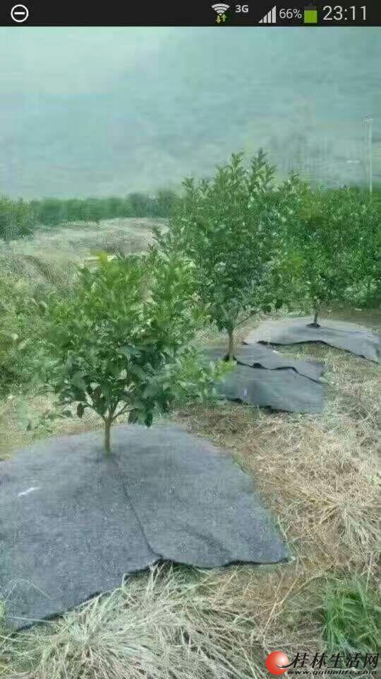 大量供应果树保水毛毯