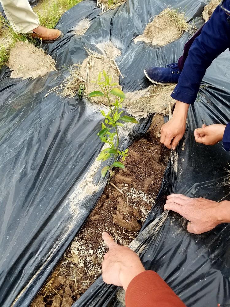 懒人果树种植法,为你省的不止是钱。