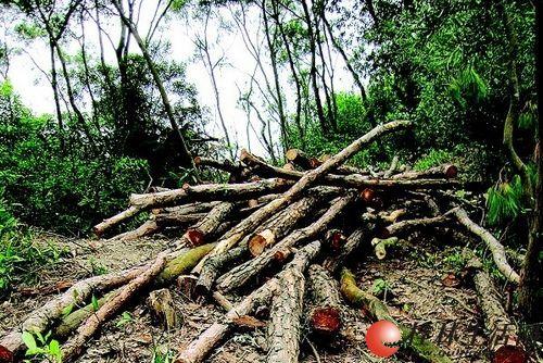 桂林与十二县团队砍树,割草,挖地
