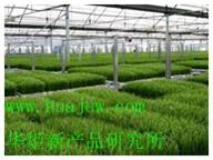 水稻增温剂华炬新产品研究所