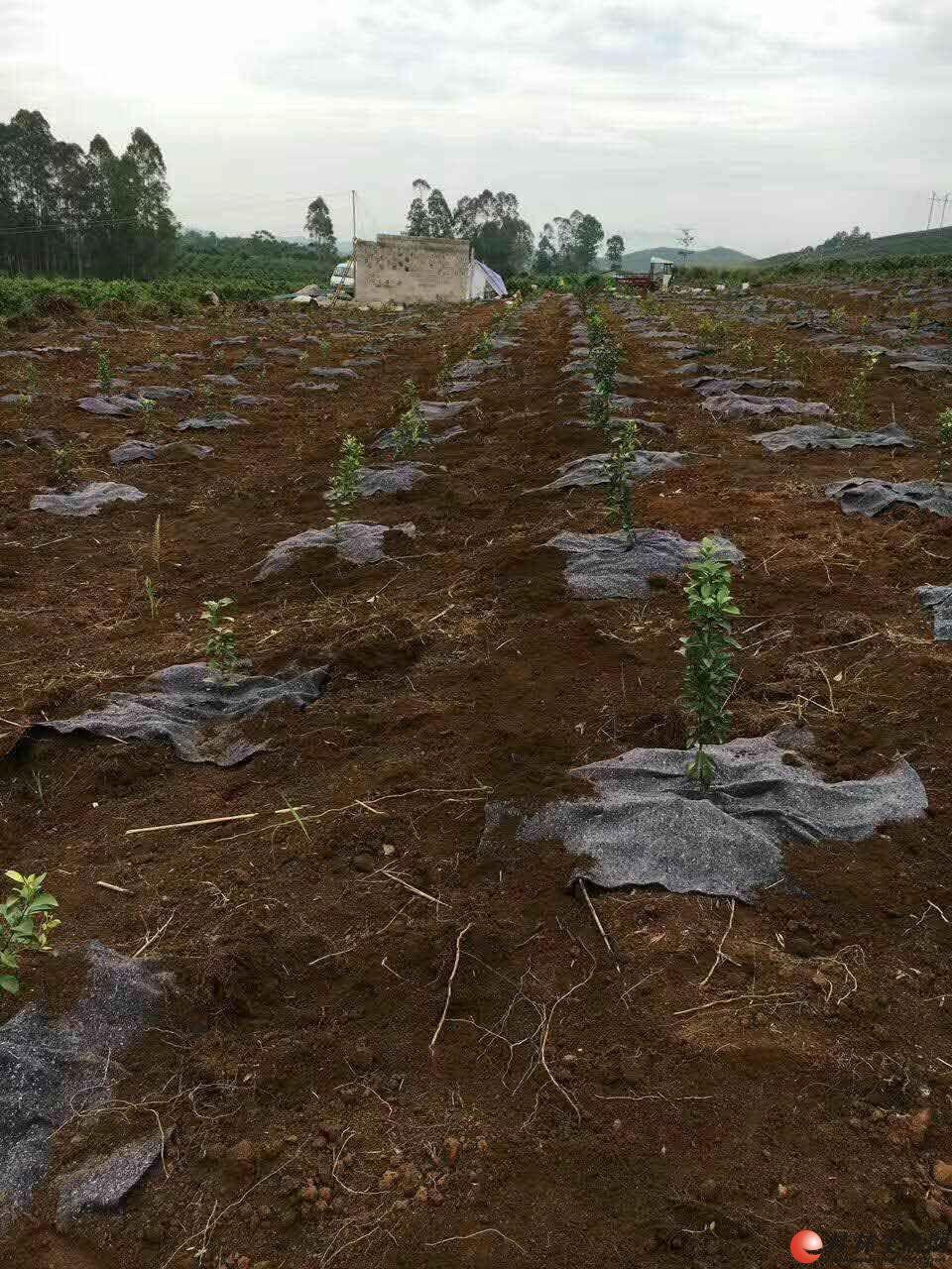 供应果树除草、保水毛毯