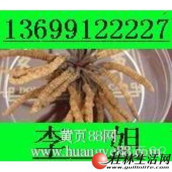 回收冬虫夏草东阿阿胶13699122227回收5X极草含片淡干海参