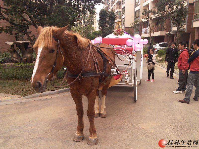 我的马车我的荣耀-欧式马车在桂林!