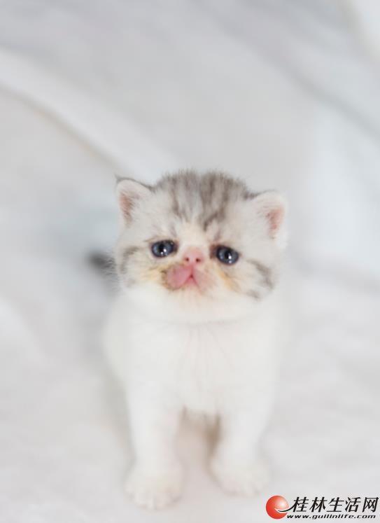 加菲猫接受预定 可以讲价