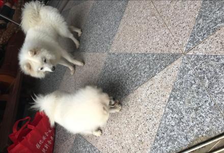 重金寻找心爱的宠物狗狗