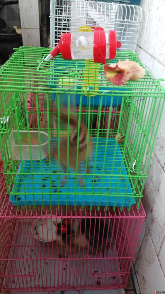 出一隻松鼠,電話微信同號13367831104
