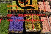 鲜花保鲜冷库/喷泡保鲜冷库【销售安装、维修保养】18978356149