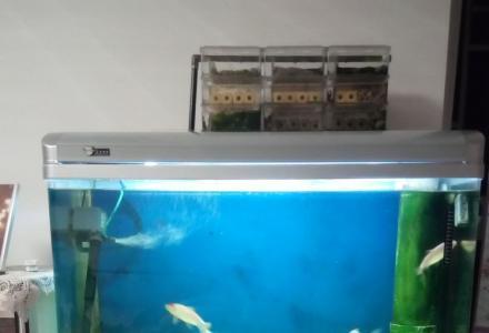 1米带柜鱼缸,送1个小缸