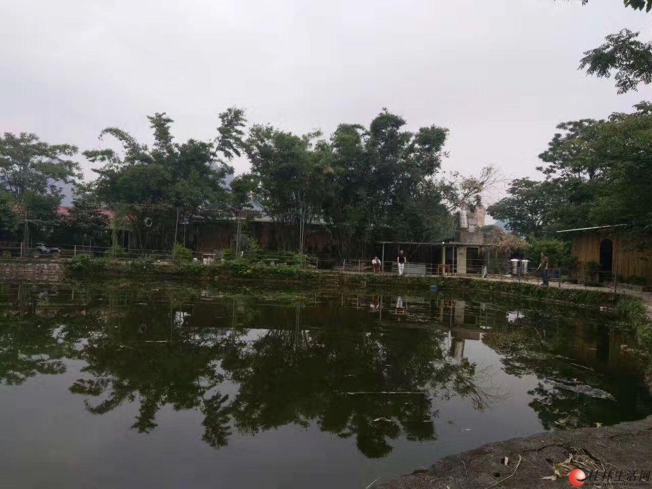 鱼塘开钓(生态养殖)