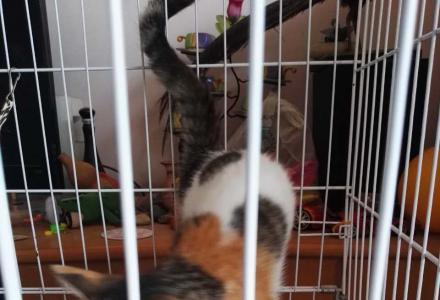 可爱小猫一只加大笼子