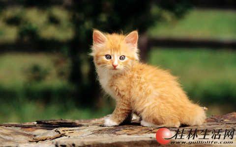 小猫满月啦,家里自己养的,欢迎前来领养