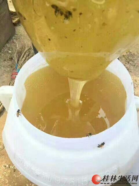 农家自养纯蜂蜜出售,质量保证假一赔十,需要的朋友请联系我18278305576