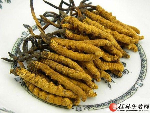 桂林地区高价回收冬虫夏草137-6843-8513回收虫草