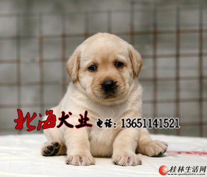 北京纯种古牧多少钱一只
