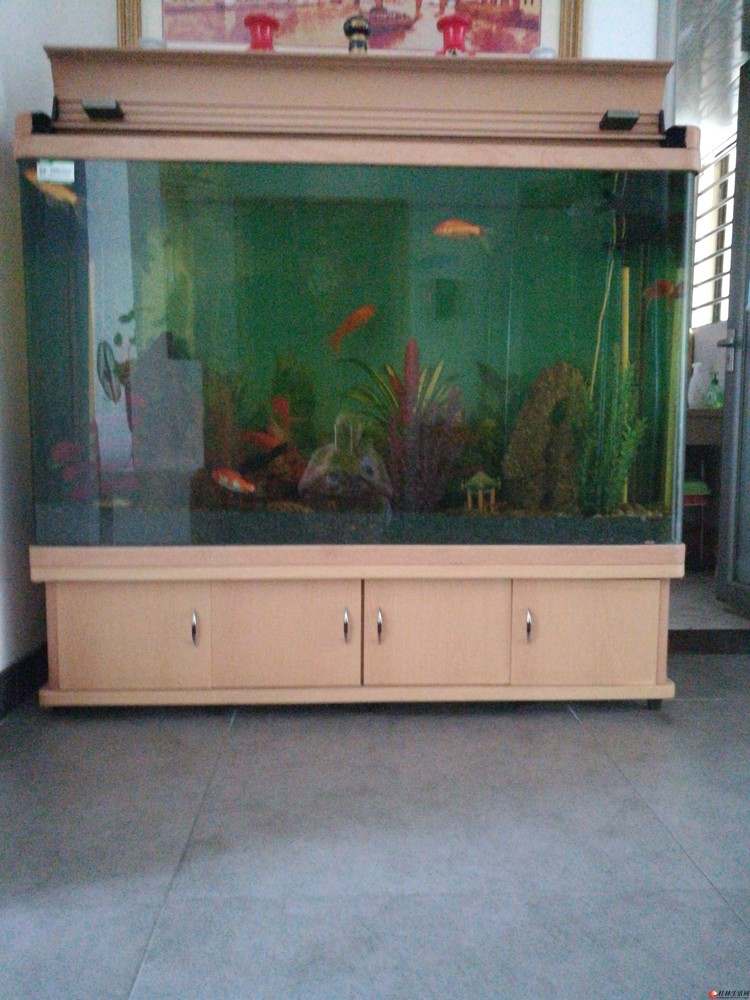 低价出售带泵及循环系统鱼缸