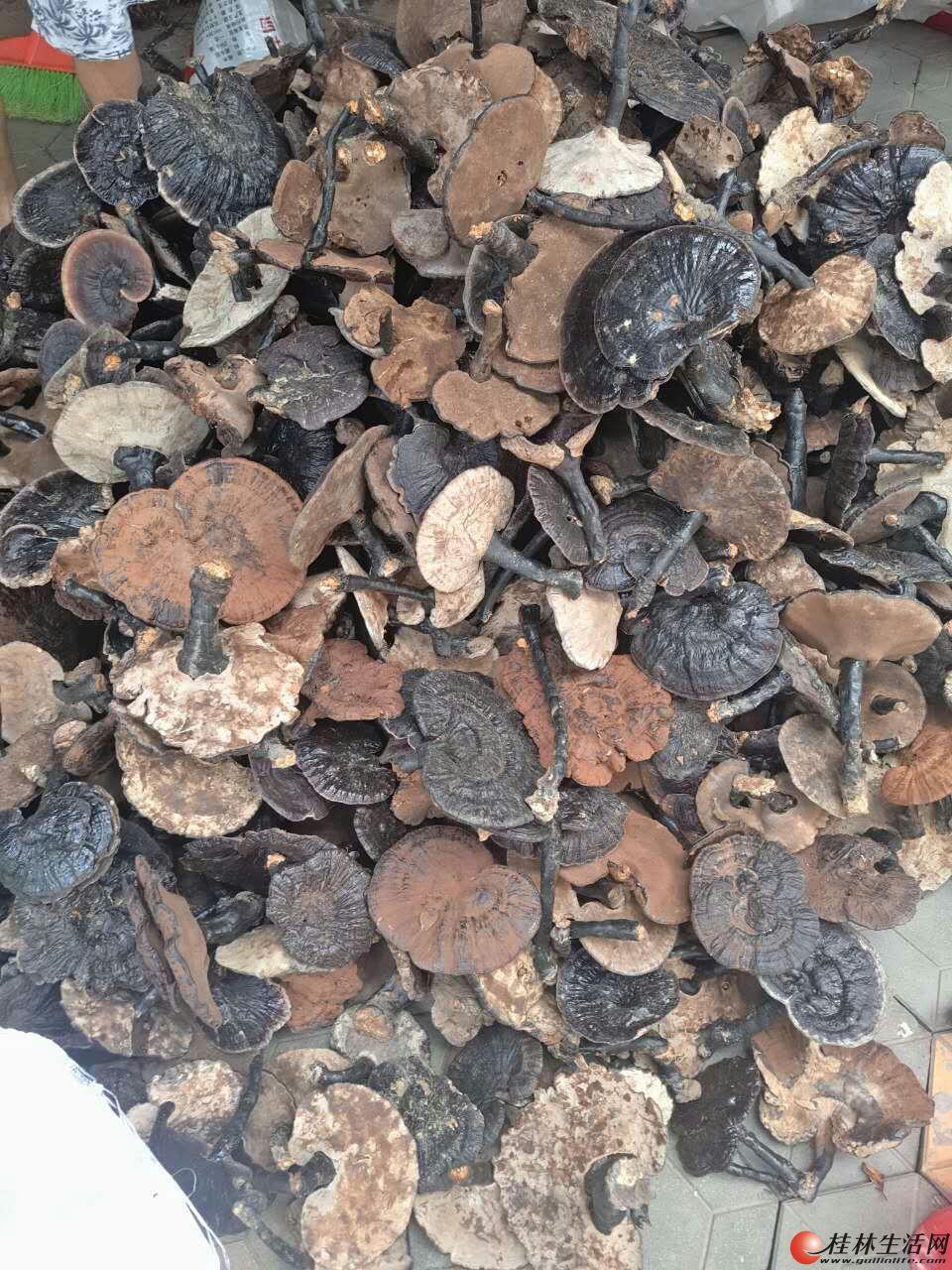 长期出售野生灵芝,茶油,丹洲古城百年老树沙田柚。