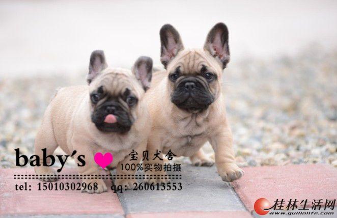 桂林纯种法国斗牛犬多少钱一只纯种法国斗牛犬价格