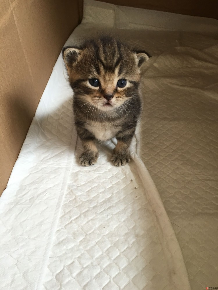 自家养1个月大小奶猫找新家