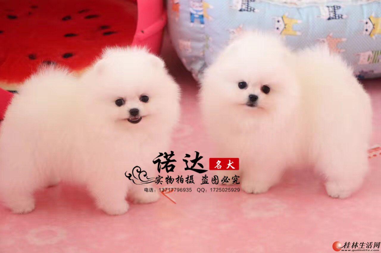 哪里卖纯种博美犬多少钱一只