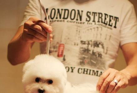 桂林有卖纯种比熊幼犬的吗多少钱一只