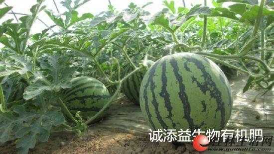 有机肥,农民的好帮手!