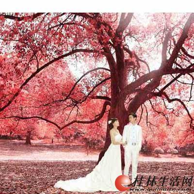 杭州圣摄影秋天哪里拍婚纱照外景西湖外景婚纱照哪里最好
