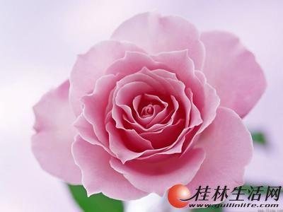 广西函授:桂林教学点:报名只交考试费100元 ,10月份考试12录取后交学费