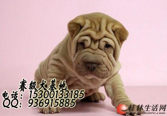 哪里有卖沙皮狗狗的 多少钱一只