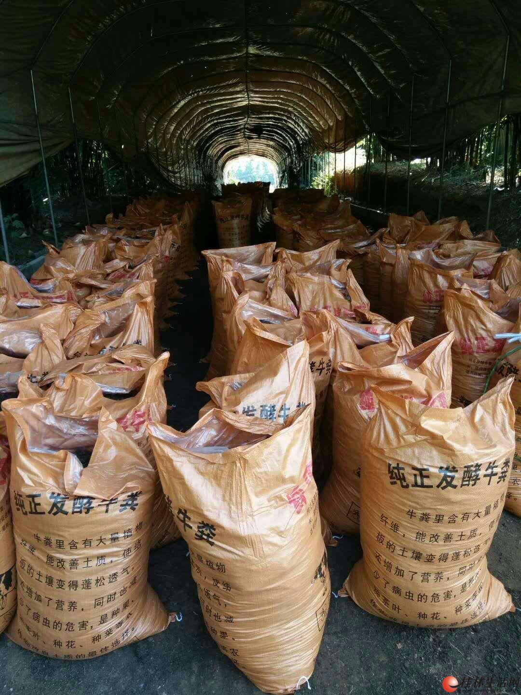 大量供应纯干发酵牛羊粪