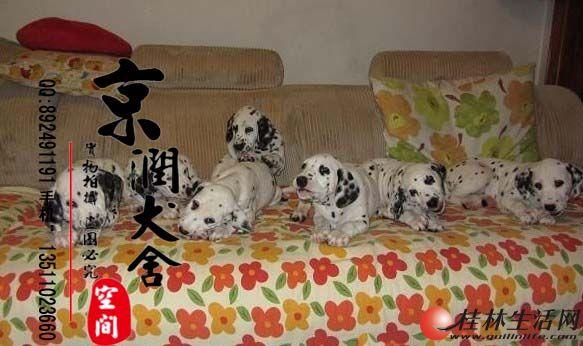 桂林有卖斑点小狗的吗