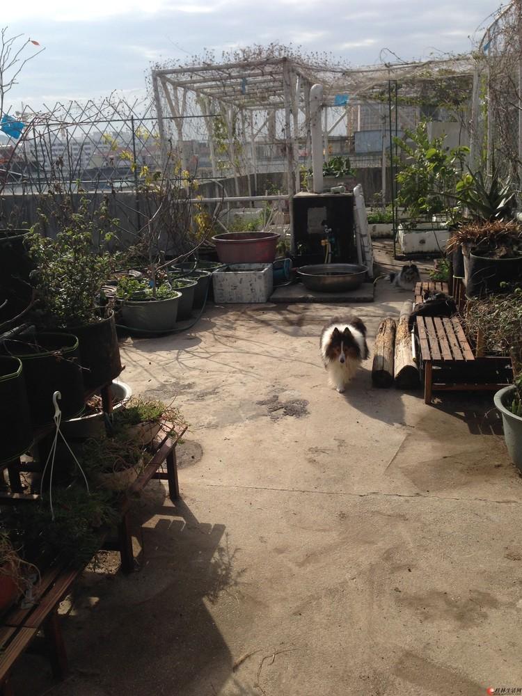 喜宠 家庭宠物寄养 可视频13977300599